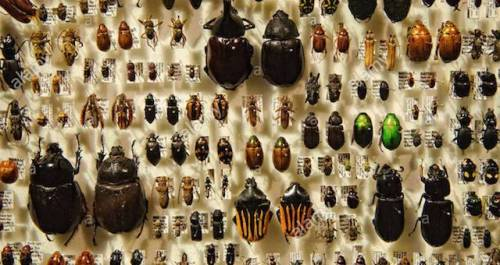 Insects-on-Display
